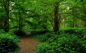 bosque, árboles, carretera, naturaleza