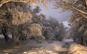 Kopavogur, Islande, Kópavogur, Islande, hiver, neige, forêt, arbres, route