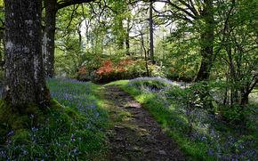 森, 歩道, 木, 自然
