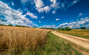 field, ears of corn, road, landscape