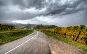 autumn, road, vineyard, Niedermorschwihr, Alsace, France
