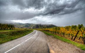 осень, дорога, виноградник, Нидерморшвир, Эльзас, Франция
