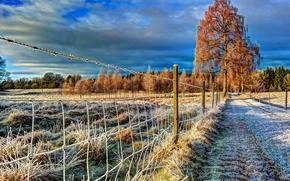 поле, дорога, осень, забор, иней, деревья, пейзаж