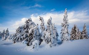 Nordseter Fjellpark, Lillehammer, Norway, Лиллехаммер, Норвегия, зима, снег, сугробы, деревья, ели
