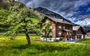 campo, domestico, albero, Montagne, Svizzera, paesaggio