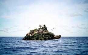 morze, żółw, wyspa