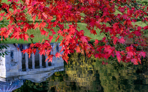 Stourhead Garden, Wiltshire, england, Sturhed, Wiltshire, England, landscaped park, lake, autumn, maple, BRANCH, foliage, reflection