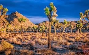 Joshua Tree, Salida del sol brillante, paisaje