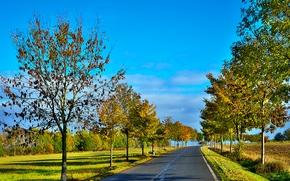 поле, дорога, деревья, пейзаж