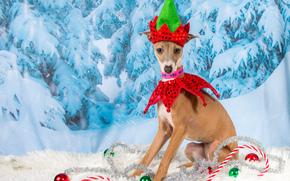 Nouvelle Année, chien, Ballons, tinsel