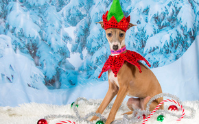 Neujahr, Hund, Luftballons, Lametta