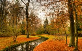 otoño, bosque, árboles, pequeño río, naturaleza
