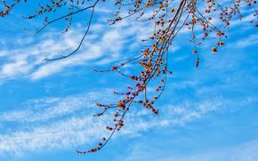 небо, облака, ветки, природа