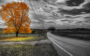 autumn, road, field, tree, landscape