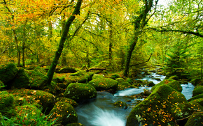 autumn, forest, trees, river, stones, moss, nature