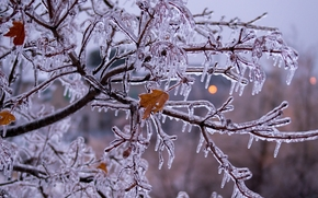 tree, branch, Icicles, ice, icy branch, nature