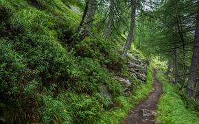 las, drzew, chodnik, charakter