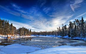 冬天, 河, 树, 景观