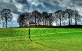 campo, Hills, árboles, NUBES, paisaje