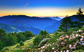 DAWN, Mountains, trees, Flowers, landscape