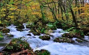 осень, река, течение, лес, деревья, природа
