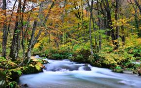 jesień, rzeka, kurs, las, drzew, charakter