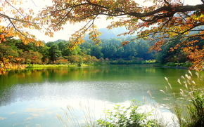 lake, autumn, trees, landscape