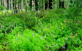 floresta, árvores, plantas, Flores, natureza