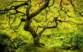 日本庭園, ツリー, 秋, 自然