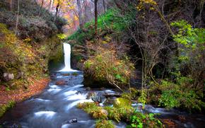 лес, деревья, осень, водопад, речка, природа