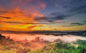 закат, небо, вкрхушки деревьев, туман, пейзаж