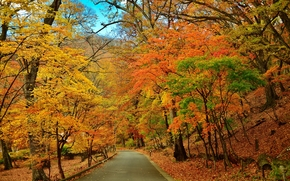 autumn, park, road, trees, landscape