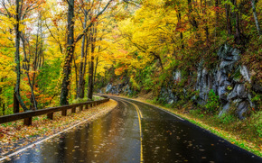 Great Smoky Mountains National Park, Tennessee, autumn, road, wet asphalt, forest, trees, landscape