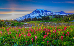 закат, горы, холмы, цветы, Mount Rainier National Park, United States National Park, пейзаж