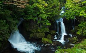 森, 木, 滝, 岩, 風景