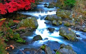 речка, течение, камни, деревья, природа