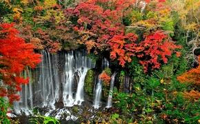 лес, деревья, осень, скалы, водопад, япония, пейзаж