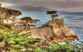 Lone Cypress, Pebble Beach, California