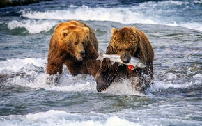 river, Bears, FISH