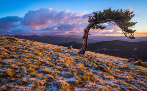 pin, Colorado, coucher du soleil, paysage, arbre solitaire