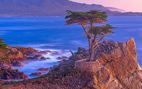 Lone Cypress Point, Pebble Beach, Point Lobos area, Big Sur, California, cypress, sea, sunset, landscape