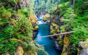 Mount Rainier National Park, Parchi Nazionali, Washington, foresta, fiume, Rocce, alberi, paesaggio
