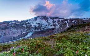 Mount Rainier National Park, Parchi Nazionali, Washington, Montagne, campo, Fiori, paesaggio