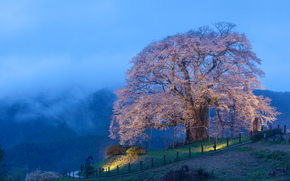 Montagne, Colline, albero, paesaggio