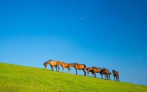 field, hill, horse