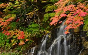 Rocce, alberi, autunno, cascata, natura