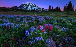 Mount Rainier National Park, национальный парк США, Вашингтон, горы, поля, цветы, пейзаж