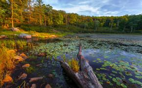 Harriman State Park, NY, lake, forest, trees, landscape