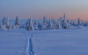 Gitsfjället, Västerbotten, Svezia, Lapponia, Västerbotten, Svezia, Lapponia, inverno, nevicata, alberi, sentiero