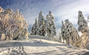 Harz National Park, Germany, Национальный парк Гарц, Германия, зима, снег, деревья